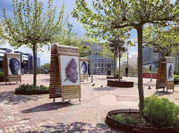 Hom Nguyen Exposition en plein air à Cergy Pontoise